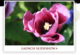 Launch Slideshow
